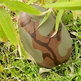 Oeuf Camouflage Autrement chocolat
